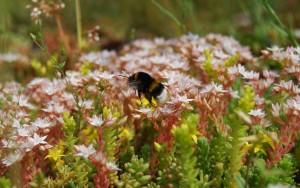 dach zielony fauna i flora