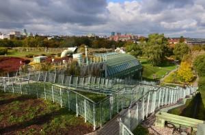 Zielony dach BUW