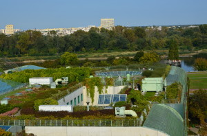 Dach zielony BUW