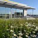 Dachy zielone a adaptacja do zmian klimatu – przykłady świadomej polityki w miastach