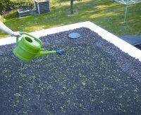 dach zielony podlewanie