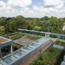 Retencjonowanie wód opadowych przez dachy zielone