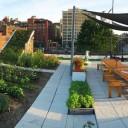 Farma miejska – warzywa i owoce prosto z dachu