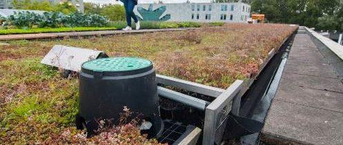 Błękitno-zielone dachy o zwiększonej retencji wodnej