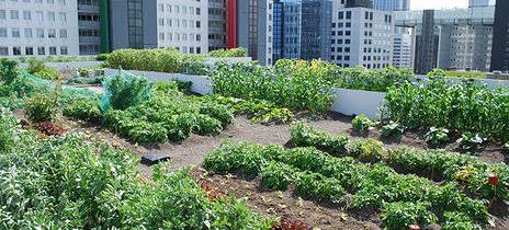 Rolnictwo miejskie: pakiet urban farming – farma miejska na dachu zielonym
