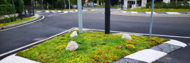 NBS, zielona infrastruktura: maty rozchodnikowe zamiast trawników