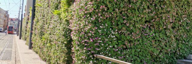 Zielone dachy w Katowicach – ekologia w praktyce