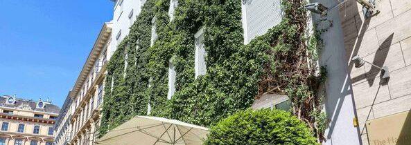 Wiedeń finansuje zazielenianie fasad, dachów i dziedzińców. Tak walczy ze zmianami klimatycznymi
